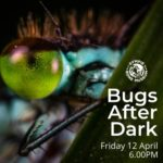 School Holiday Fun: Bugs After Dark Torchlight Tour