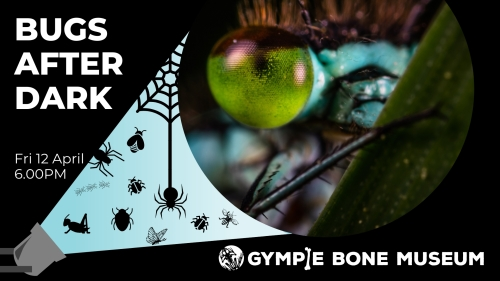 bugs after dark torchlight tour gympie bone museum holiday fun