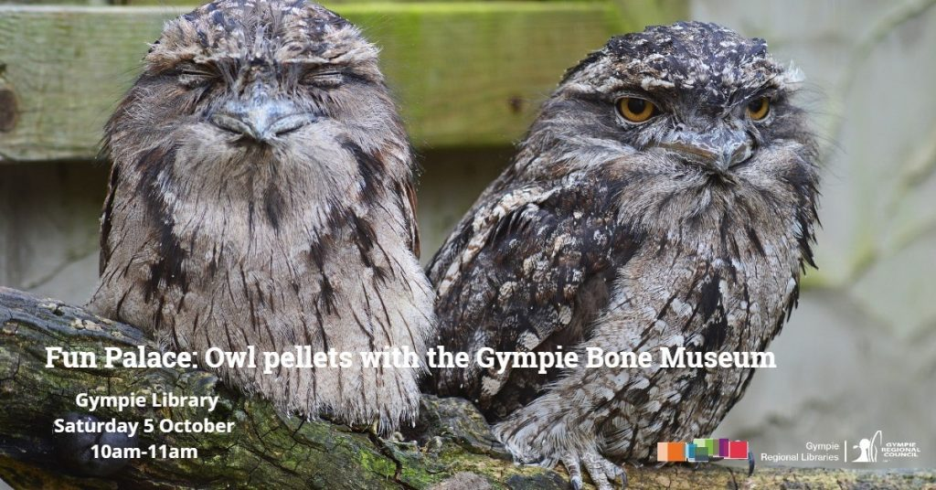 Gympie Bone Museum will be delivering an owl pellet workshop at the Gympie Regional Library Fun Palace on October 5!