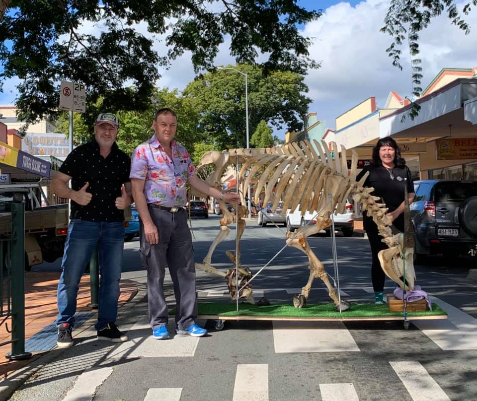 The skeleton crew were shoulder to shoulder on moving day at Gympie Bone Museum